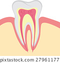 Structure of human tooth 27961177
