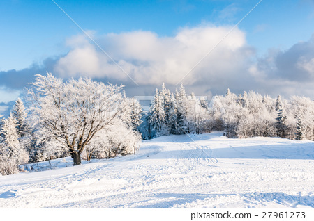 Winter forest with cloudy blue sky 27961273