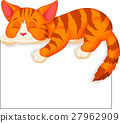 cat kitty animal 27962909