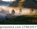 misty morning sunrise in strawberry garden  27963057