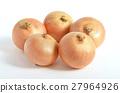 洋蔥 光澤 波蘭 27964926