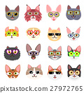 猫 猫咪 小猫 27972765