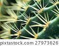 仙人掌 荊棘 植物 27973626