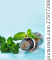 oil, mint, essential 27977288