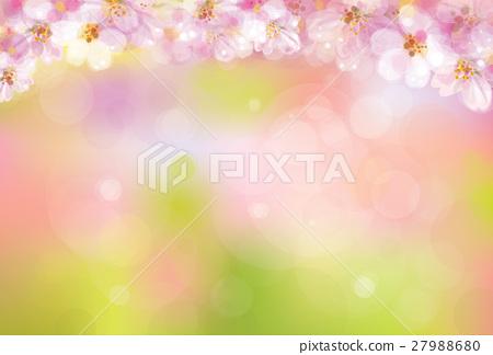 Vector blossoming sakura  background. 27988680