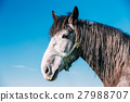 Close Up Of Horse On Blue Sky Background 27988707