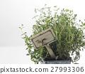 pot, thyme, herb 27993306