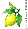 lemon, lemons, hand 27996104