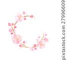 輪になったピンクの梅の花 27996609