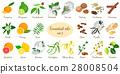 Big set of essential oil plants. Vanilla, cinnamon 28008504