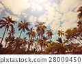 Tropical beach 28009450