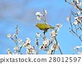 梅 花朵 花卉 28012597