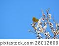 梅 花朵 花卉 28012609