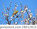 梅 花朵 花卉 28012615