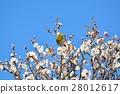 梅 花朵 花卉 28012617