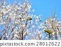 梅 花朵 花卉 28012622