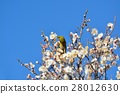 梅 花朵 花卉 28012630