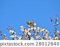 梅 花朵 花卉 28012640