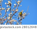 梅 花朵 花卉 28012648
