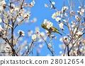 梅 花朵 花卉 28012654