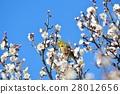 梅 花朵 花卉 28012656