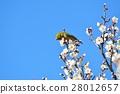 梅 花朵 花卉 28012657