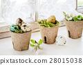 Colorful Easter quail eggs 28015038