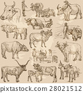 animals cattle collection 28021512