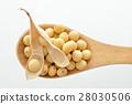 콩 28030506