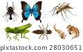 Different types of insects 28030651