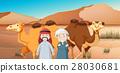 骆驼 阿拉伯 沙漠 28030681