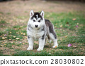 puppy on green grass 28030802