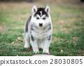 puppy on green grass 28030805