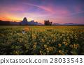 Woman holding orange umbrella in sunflower field 28033543