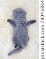 แมว,สัตว์,สัตว์ต่างๆ 28043864
