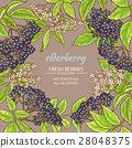 elderberry, herb, flower 28048375