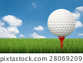 golf ball on tee with green grass 28069209