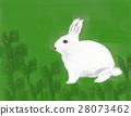 草原的白色兔子 28073462