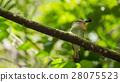 Small little green bird 28075523