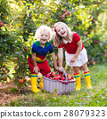 Kids picking apples in fruit garden 28079323