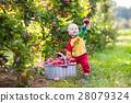 Baby boy picking apples in fruit garden 28079324
