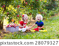 Kids picking apples in fruit garden 28079327