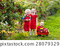 Kids picking apples in fruit garden 28079329