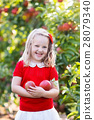 Little girl picking apple in fruit garden 28079340