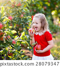 Little girl picking apple in fruit garden 28079347