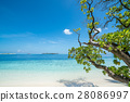 Beach with trees in foreground 28086997