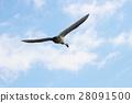 หงส์,นก,นิกะตะ 28091500