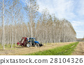 Poplar grove and tractor 28104326
