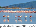 Flock of flamingos 28105522