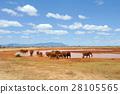 Elephant in National park of Kenya 28105565